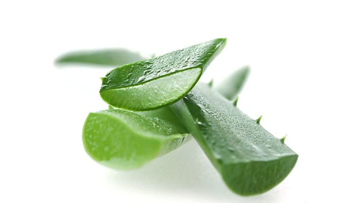 Halt the Growth of Cancer with Aloe Vera