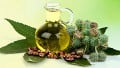 Top Benefits Of Castor Oil You Need To Know
