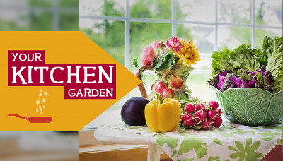 Good Health Right From Your Kitchen Garden (Part 1)