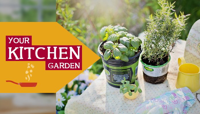 Good Health Right From Your Kitchen Garden (Part 2)