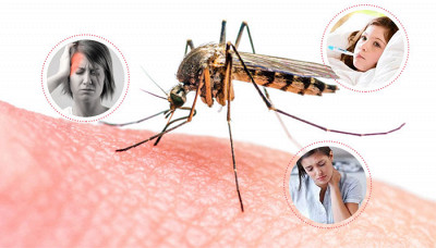 All You Need To Know About Dengue