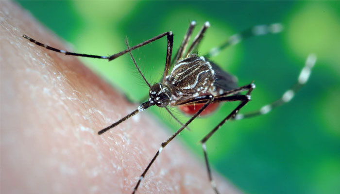 All You Need To Know About Chikungunya!