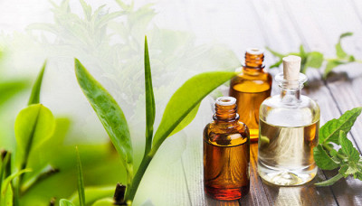 Tea Tree Oil: 6 Benefits You Need To Know